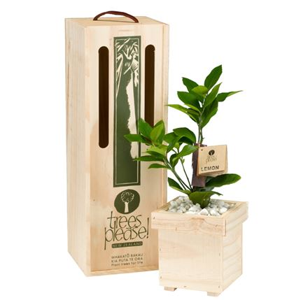 lemon tree gift box image