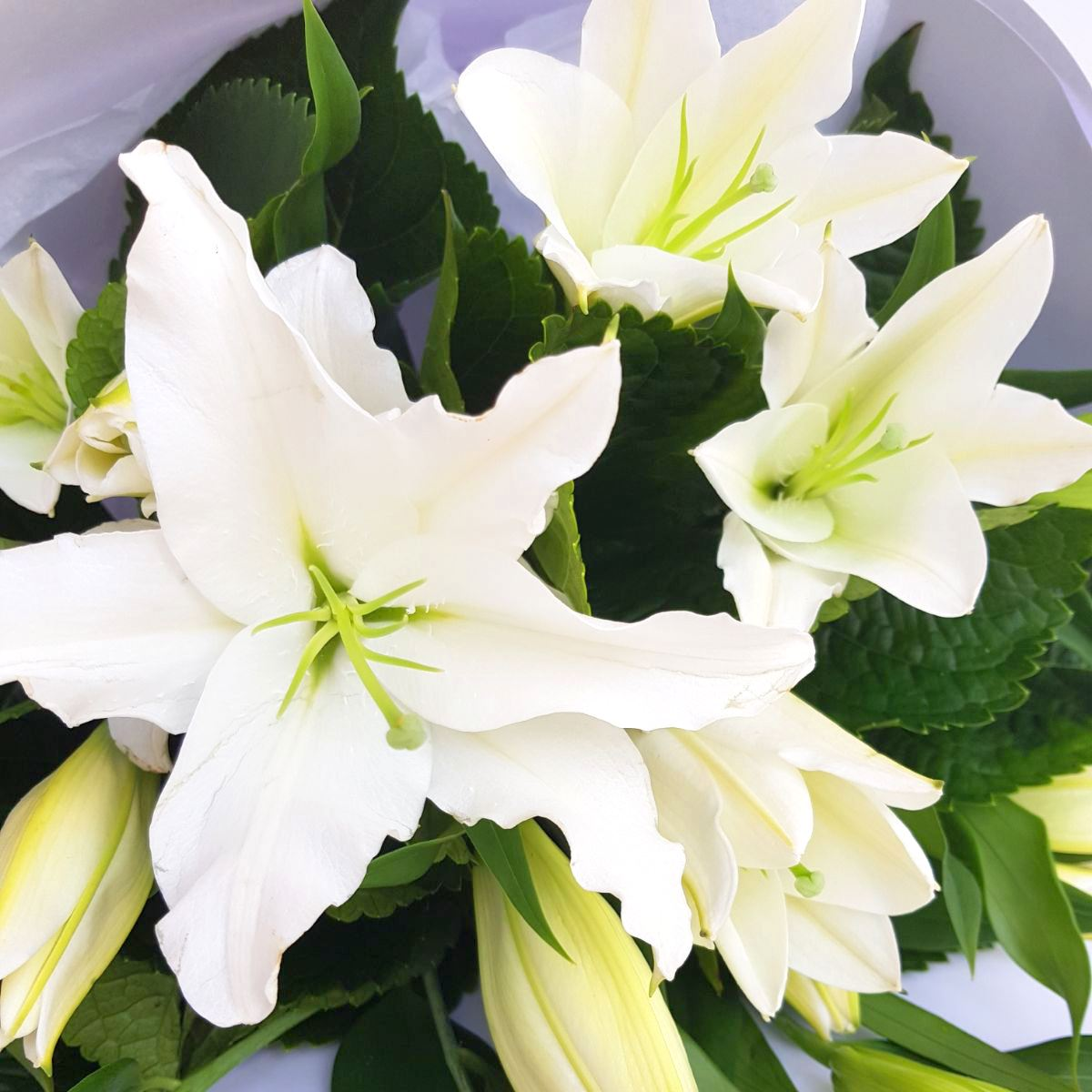 White Lilies Flower Bouquet Of White Lilies Free Delivery