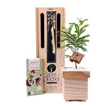Picture of Tree Gift with Organic Chocolate