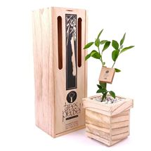 Picture of Living Lime Tree Gift