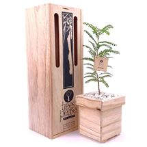 Picture of Kowhai Tree Gift