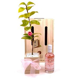 Picture of G & Tree Living Tree Gift