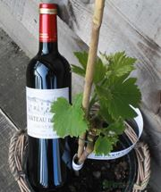 Picture of Wine and Vine