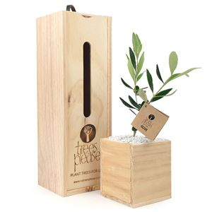 Picture of Living Olive Tree Gift