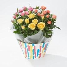 Picture of Cheerful Rose Plants